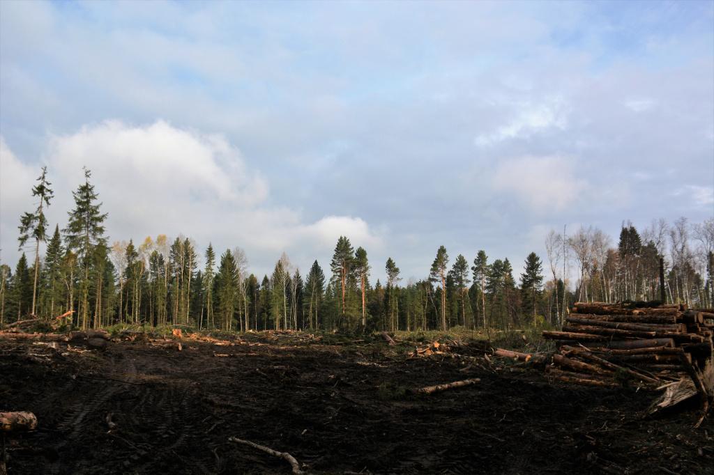 Вырубка деревьев на землях сельскохозяйственного назначения
